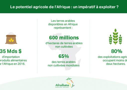 « L'AFRIQUE : UN POTENTIEL AGRICOLE INEXPLOITÉ ? »