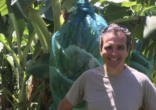 M. DENIS LOEILLET (CIRAD) « L'UE A TOUT INTÉRÊT À CONTINUER DE SOUTENIR LA PRODUCTION DES BANANES ACP »
