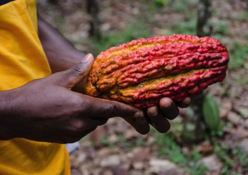 L'Accord post-Cotonou et le secteur agricole africain